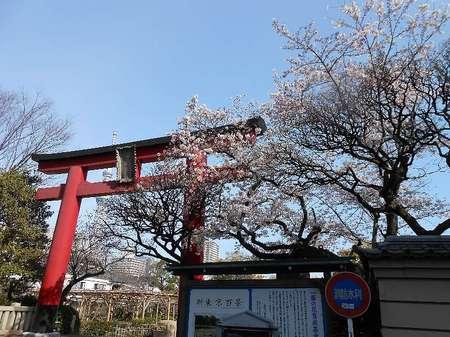 170406亀戸天神社_1.jpg