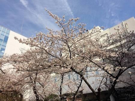 170406福神橋_2.jpg