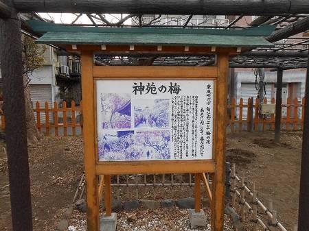 180220亀戸天神_5.jpg