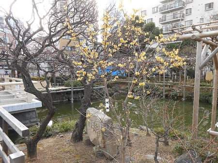 180220亀戸天神_7.jpg