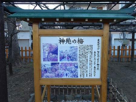 170214亀戸天神_4.jpg
